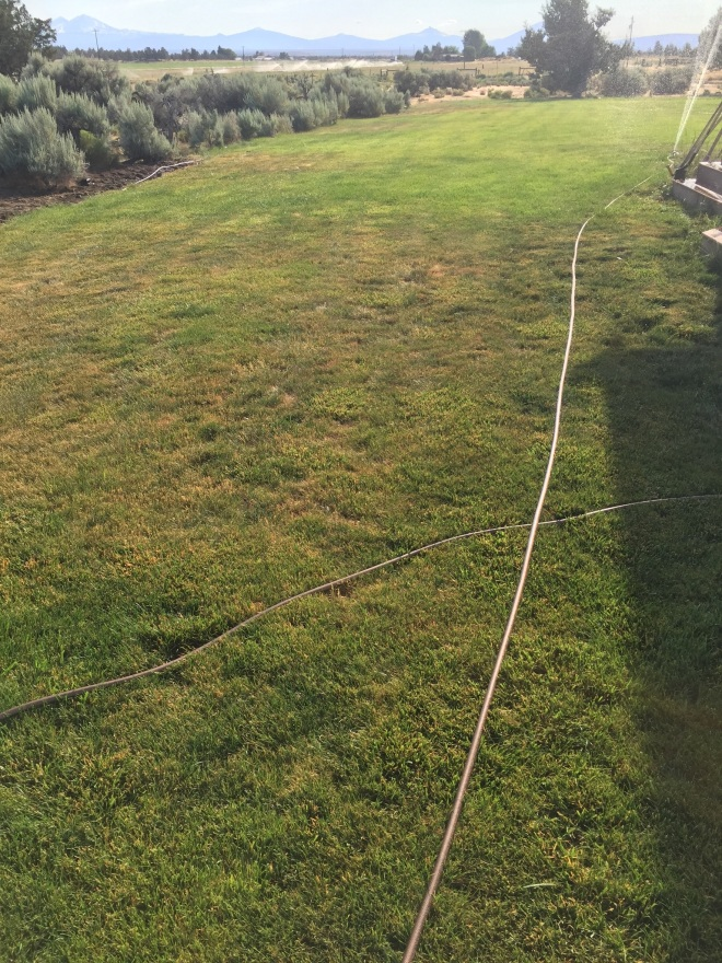 Lawn Insect Damage